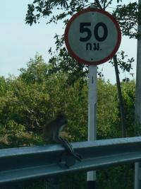 Monkey waiting