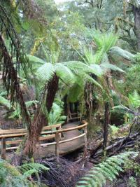 Rain forest du Cape Otway