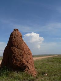 Termitiaire