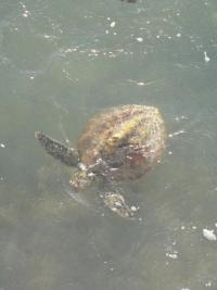 Tortue de Corail Bay