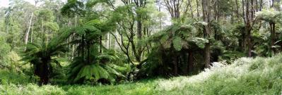 La forêt avec les arbres !!