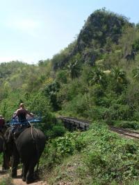 Eléphant sur la voie