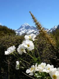 Mont Aoraki (NZ)